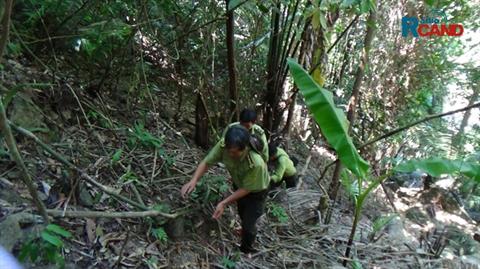 Chảy máu rừng và những bất cập trong bảo vệ tài nguyên rừng