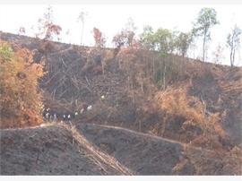 Đăk Nông: Đấu tranh mạnh với tội phạm phá rừng